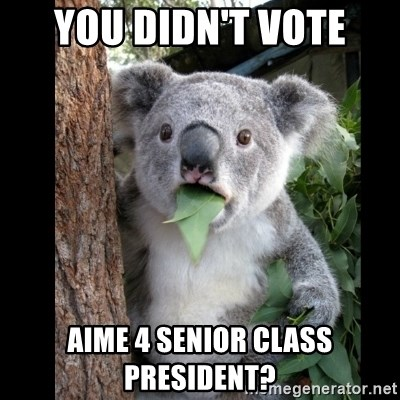Koala can't believe it - YOU DIDN'T VOTE AIME 4 SENIOR CLASS PRESIDENT?