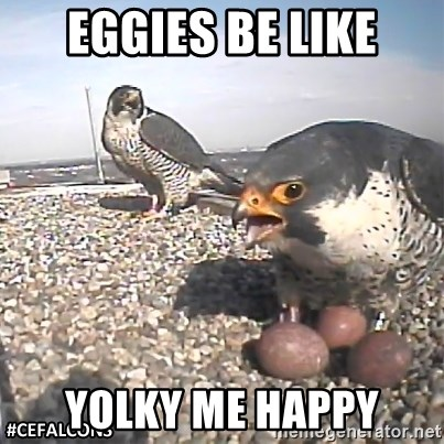 #CEFalcons - Eggies be like Yolky Me Happy
