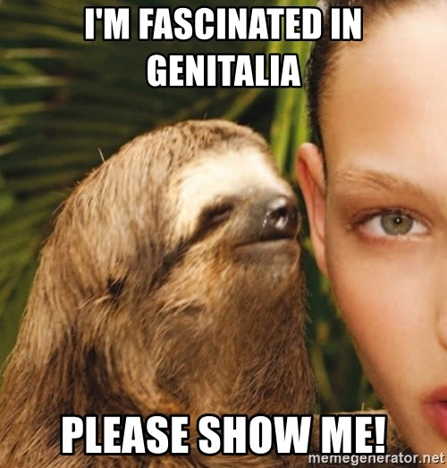 The Rape Sloth - I'M FASCINATED IN GENITALIA PLEASE SHOW ME!