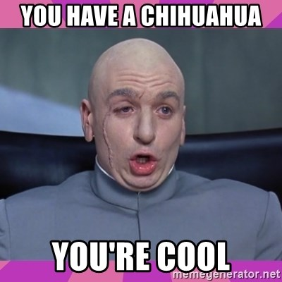 drevil - YOU HAVE A CHIHUAHUA  YOU'RE COOL