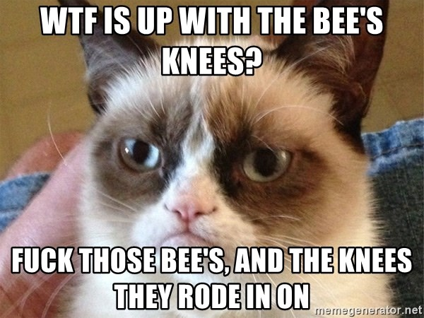 Angry Cat Meme - wtf is up with the Bee's knees? fuck those bee's, and the knees they rode in on