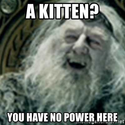 you have no power here - A kitten? You have no power here