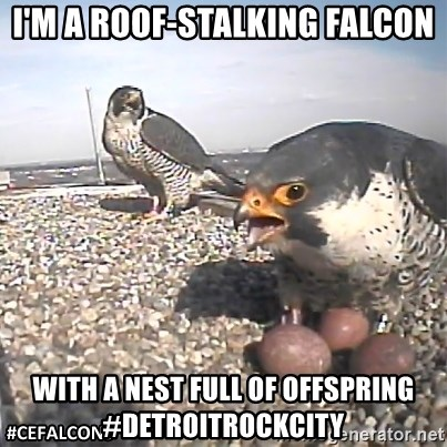 #CEFalcons - I'm a roof-stalking falcon with a nest full of offspring #detroitrockcity