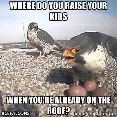 #CEFalcons - Where do you raise your kids when you're already on the roof?