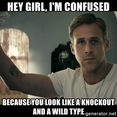 ryan gosling hey girl - hey girl, I'm confused because you look like a knockout and a wild type