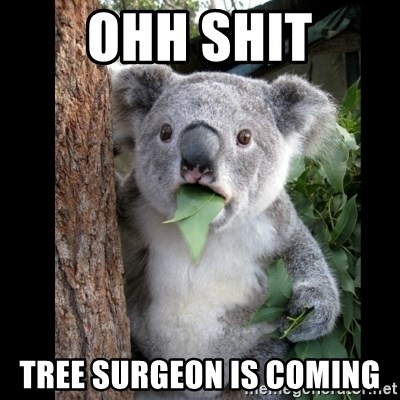 Koala can't believe it - OHH SHIT TREE SURGEON IS COMING