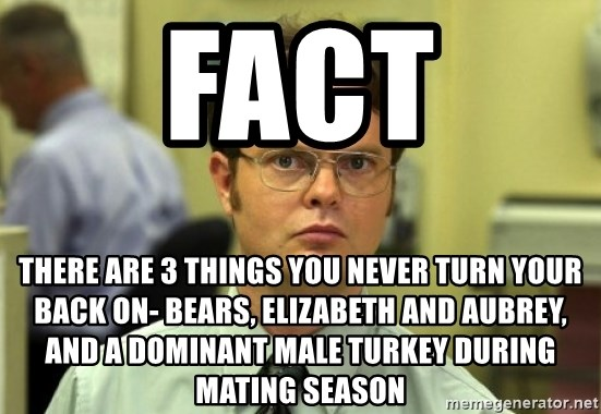 Dwight Meme - FAct There are 3 things you never turn your back on- bears, elizabeth and Aubrey, and a dominant male turkey during mating season