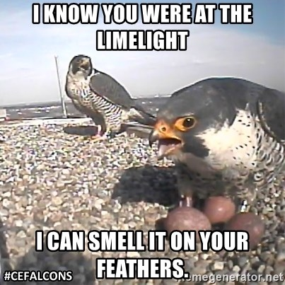 #CEFalcons - I KNOW YOU WERE AT THE LIMELIGHT I CAN SMELL IT ON YOUR FEATHERS.