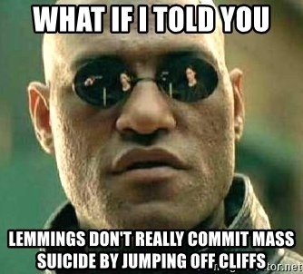 What if I told you / Matrix Morpheus - what if i told you lemmings don't really commit mass suicide by jumping off cliffs