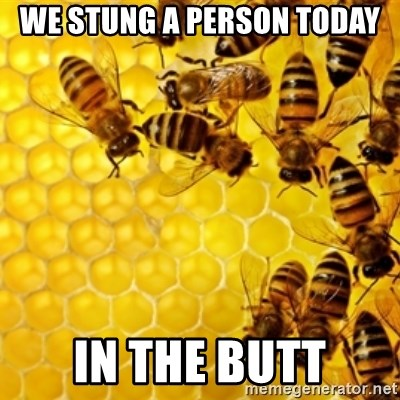 Honeybees - WE STUNG A PERSON TODAY IN THE BUTT