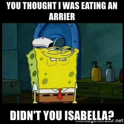 Don't you, Squidward? - You thought i was eating an arrier didn't you isabella?