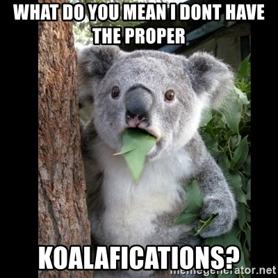 Koala can't believe it - what do you mean i dont have the proper koalafications?