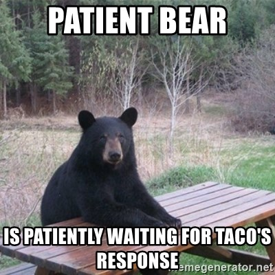 Patient Bear - patient bear is Patiently waiting for taco's response