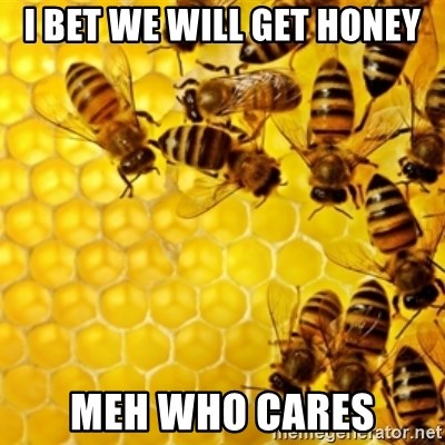 Honeybees - I BET WE WILL GET HONEY MEH WHO CARES