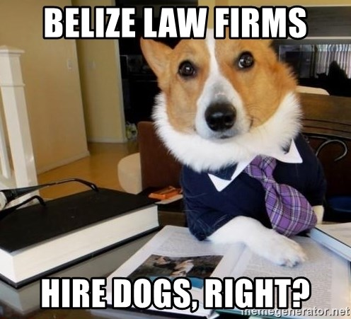 Dog Lawyer - belize law firms hire dogs, right?