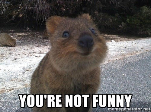 Seemingly Innocent Quokka - You're not funny