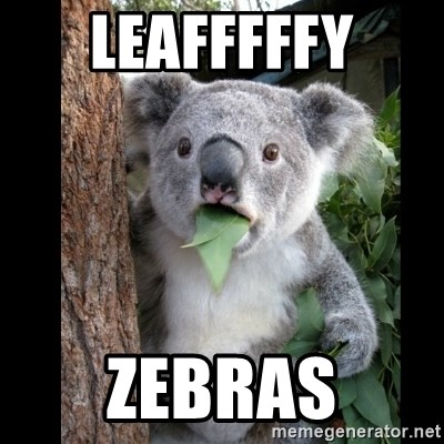 Koala can't believe it - LEAFFFFFY ZEBRAS