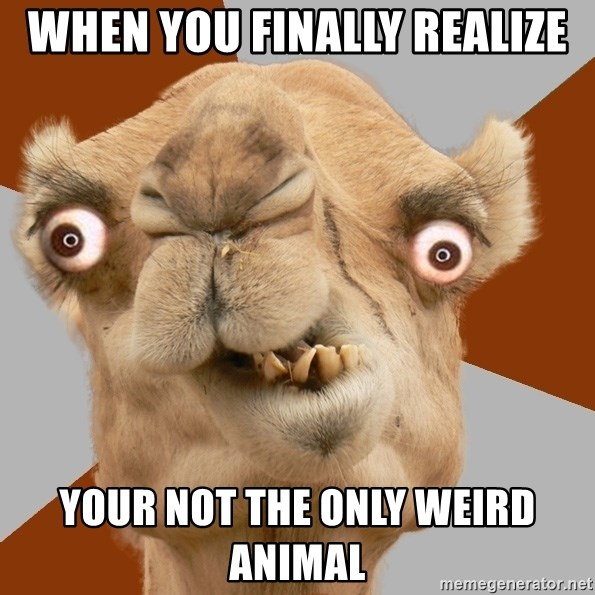 Crazy Camel lol - WHEN YOU FINALLY REALIZE YOUR NOT THE ONLY WEIRD ANIMAL