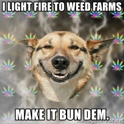 Stoner Dog - i light fire to weed farms make it bun dem.