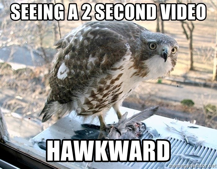 Hawkward - SEEING A 2 SECOND VIDEO HAWKWARD