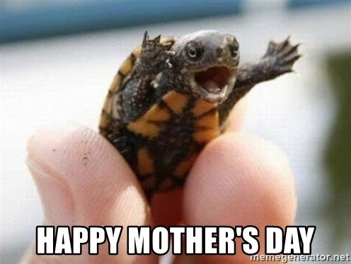 angry turtle -  Happy mother's day