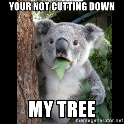 Koala can't believe it - YOUR NOT CUTTING DOWN MY TREE