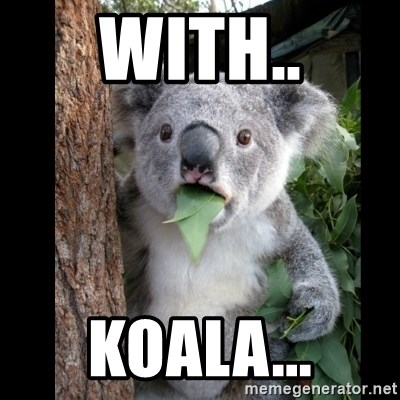 Koala can't believe it - With.. Koala...