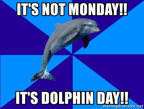 Drama Dolphin - It's not monday!! it's dolphin day!!
