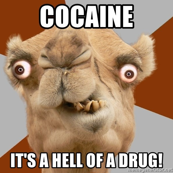Crazy Camel lol - COCAINE IT'S A HELL OF A DRUG!