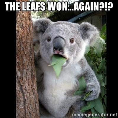 Koala can't believe it - the leafs won...again?!?