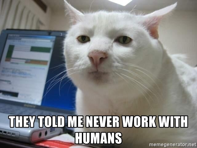 Serious Cat -  they told me never work with humans