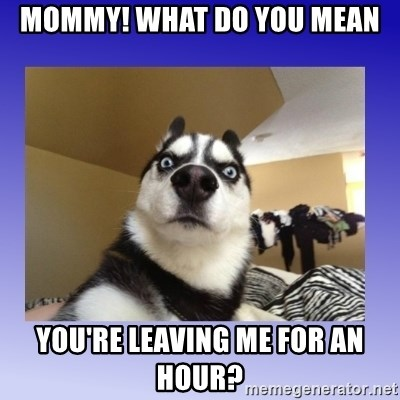 Dog Surprise - mommy! what do you mean you're leaving me for an hour?