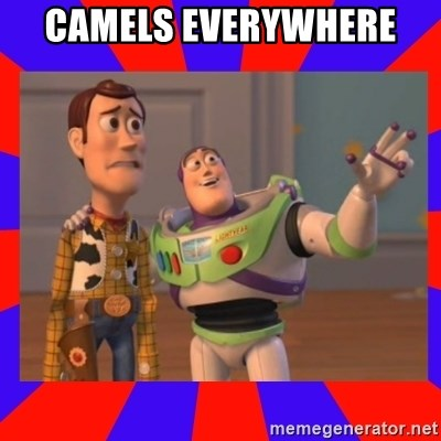 Everywhere - CAMELS EVERYWHERE
