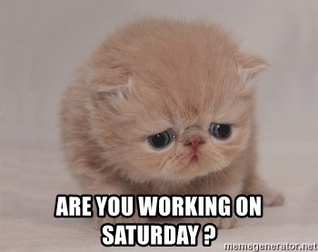 Super Sad Cat -  are you working on Saturday ?