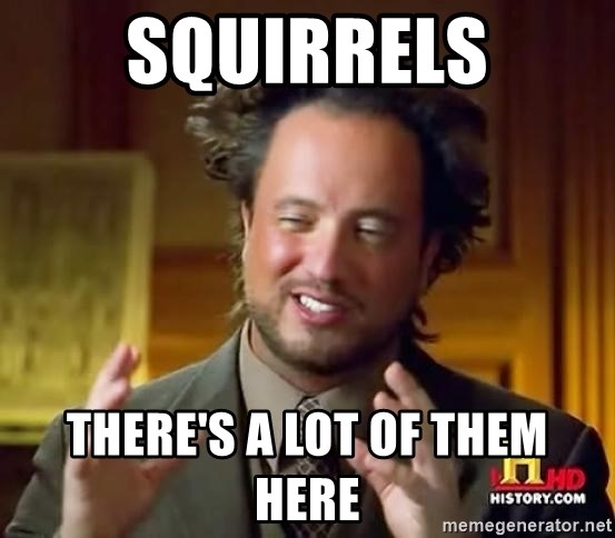 Ancient Aliens - Squirrels There's a lot of them here