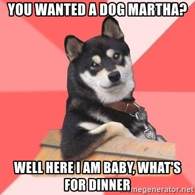 Cool Dog - You wanted a dog Martha? Well here I am baby, what's for dinner