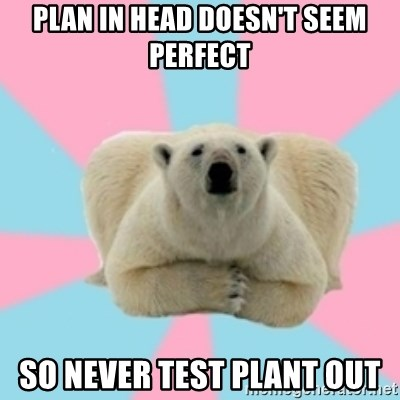 Perfection Polar Bear - Plan in head doesn't seem perfect so never test plant out