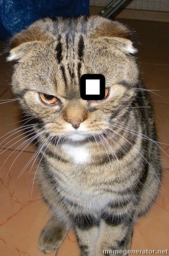 angry cat 2 -  .