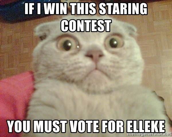 GEEZUS cat - If i win this staring contest you must vote for elleke