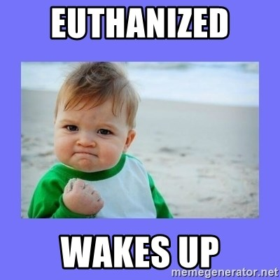 Baby fist - EUTHANIZED  Wakes up