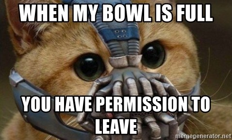 bane cat - when my bowl is full You have permission to leave