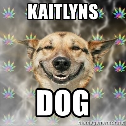 Stoner Dog - KAITLYNS DOG