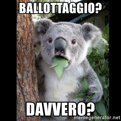 Koala can't believe it - ballottaggio? davvero?