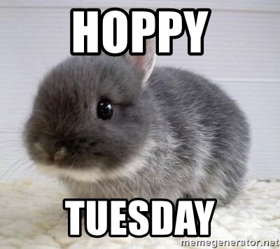 ADHD Bunny - Hoppy Tuesday