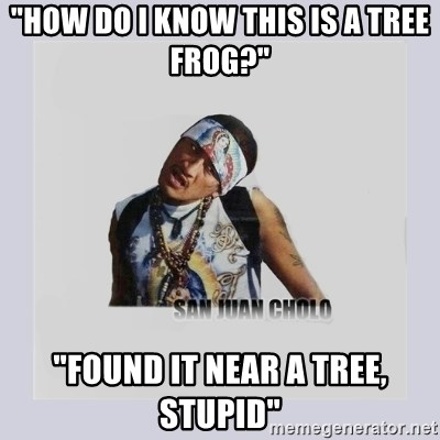 """san juan cholo - """"how do i know this is a tree frog?"""" """"found it near a tree, stupid"""""""