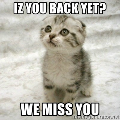38067901 iz you back yet? we miss you can haz cat meme generator,We Miss You Meme