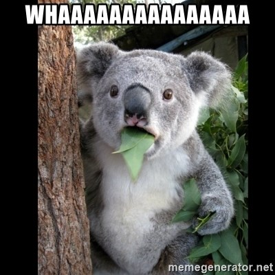 Koala can't believe it - WHAAAAAAAAAAAAAAA