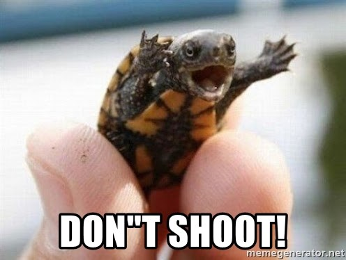 """angry turtle -  Don""""t SHOOT!"""