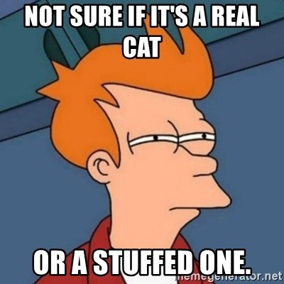 Not sure if troll - NOT SURE IF IT'S A REAL CAT OR A STUFFED one.