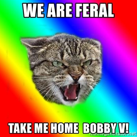 Impudent cat - We are feral TAKE me home  bobBY v!